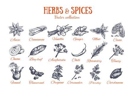 Condimenti Erbe e Spezie 4