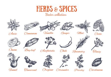 Herbs and Spices condiments 4 Stock Vector - 101211148
