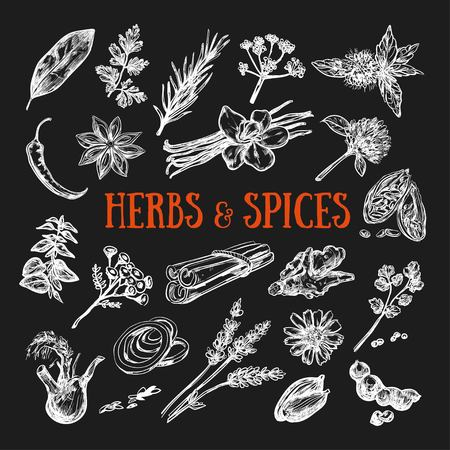 Herbs and Spices condiments 2 写真素材