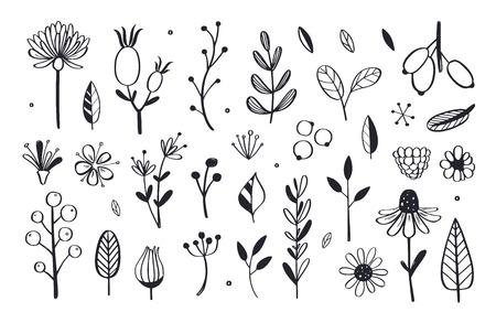 Kruidenthee en bloemen doodle set. Vector hand getekend botanische illustratie. Geïsoleerde objecten op wit
