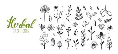 Herbal tea and floral doodle set. Vector hand drawn 写真素材