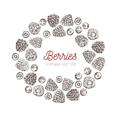 Wildberries vector vintage frame. Hand drawn decorative elements . Healthy food, raspberry,