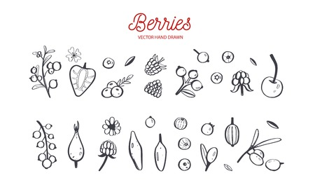 Wild Berries and fruits vector set. Raspberry, Cherry, strawberry, blackberry and other summer harvest. Hand drawn isolated objects on white. Botanical doodle Ilustracja