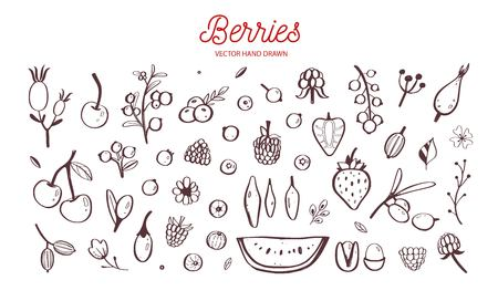 Wild Berries and fruits vector set. Raspberry, Cherry, strawberry, blackberry and other summer harvest. Hand drawn isolated objects on white. Botanical doodle  イラスト・ベクター素材