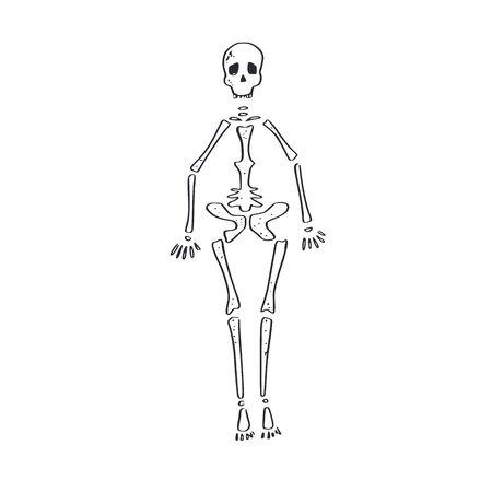 Skeleton. vector hand drawn cartoon doodle
