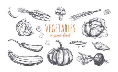 Vegetables collection. Vector hand drawn illustration. Isolated objects on white. Sketch