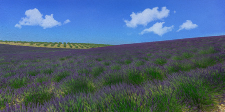 Purple lavender fields photo