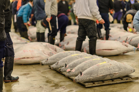 Tuna Auction at Tsukiji Market