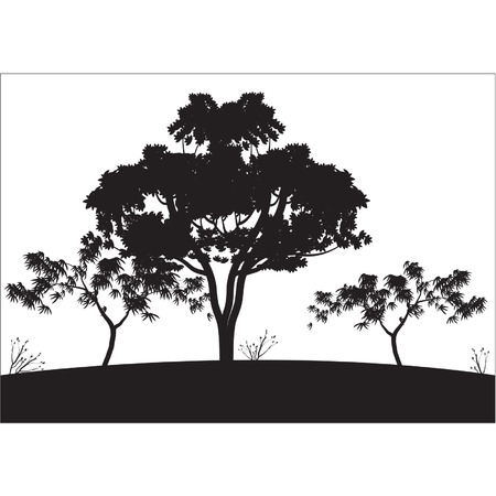 big tree: Silhouettes of big tree