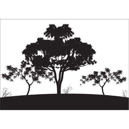 Silhouettes of big tree