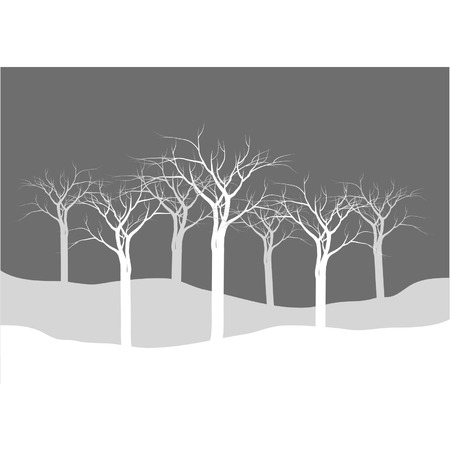 Silhouettes of dry tree forest