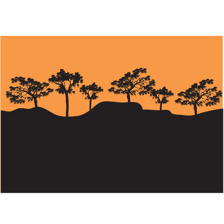 Silhouettes of trees in afternoon