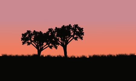 silhoutte와 함께 일출에 두 그루의 나무
