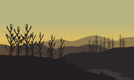 corn fields: Corn silhouette at sunset on tthe fields Illustration