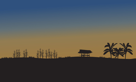 corn fields: Landscape of fields at the sunset silhouette of corn and banana tree