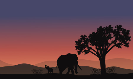 africa sunset: Africa landscape with elephant silhouette at sunset