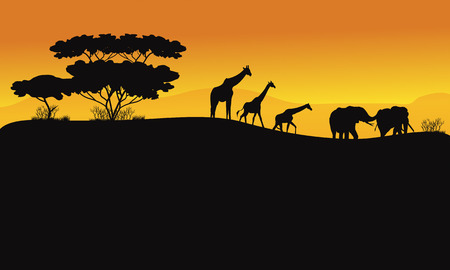 vague: Animals in hill scenery of silhouette at the sunrise