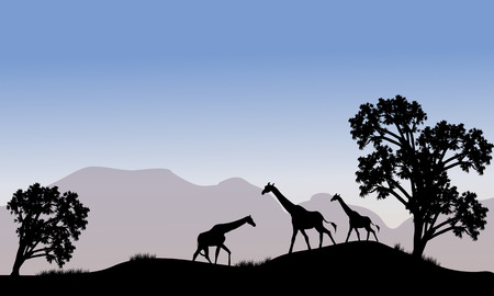 Giraffe in hills scenery with mountain backgrounds