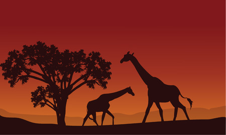 mesmerize: Two giraffe silhouette scenery at the hills