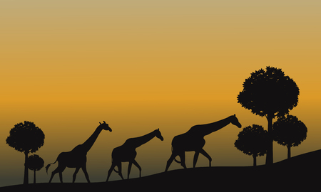 mesmerize: Silhouette of giraffe and yellow sky at the sunset Illustration