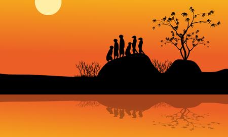 meerkat: Meerkat in lake of silhouette at tthe sunrise
