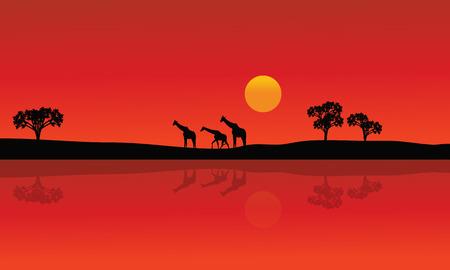 Silueta de la jirafa con fondos rojos con el sol en la tarde