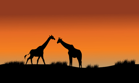 Silhouette of two giraffe in fields at the afternoon  イラスト・ベクター素材