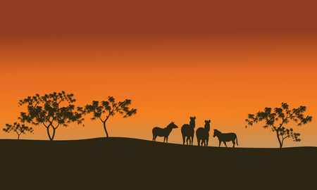 proboscis: zebra family of silhouette in hills at morning