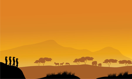 watchful: Beautiful meerkat silhouette at afternoon with orange backgrounds