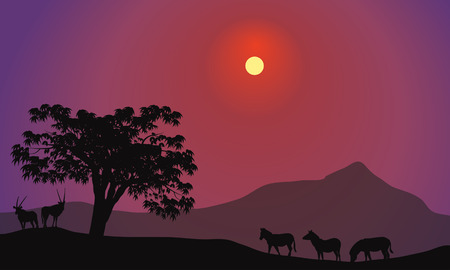 mara: Silhouette of zebra and antelope at tthe afternoon