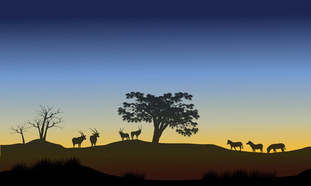 horizon over land: Scenery at morning with antelope and zebra in the hills