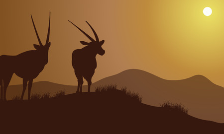 antelope: Antelope silhouette on the hills at the afternoon