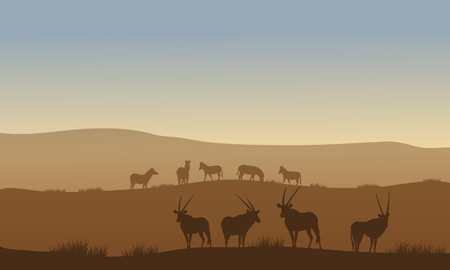 antelope: Antelope and zebra on the hills with brown backgrounds