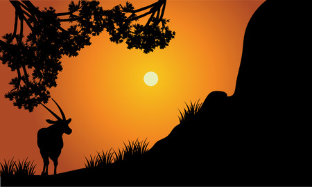 herbivore natural: Single antelope silhouette scenery at the sunset