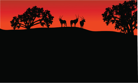 herbivore natural: Antelope group in hills scenery a very beautiful
