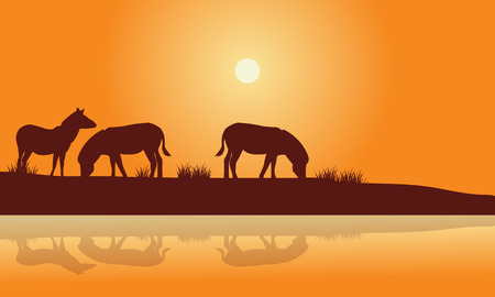 Silhouette of zebra in riverbank at the sunset