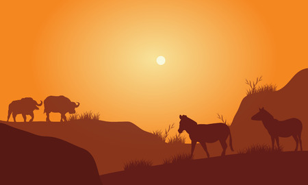 Silhouette of bison silhouette in hills at the afternoon