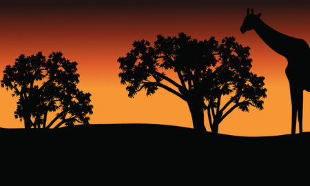 Silhouette of giraffe and trees on safari at afternoon Иллюстрация