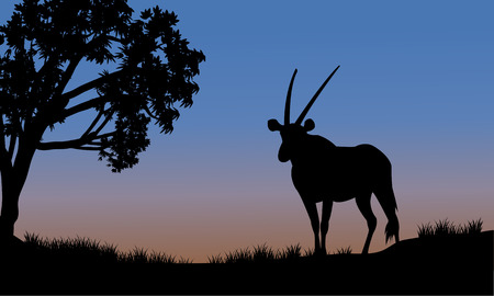 antelope: Single antelope of silhouette in park at the sunset Illustration