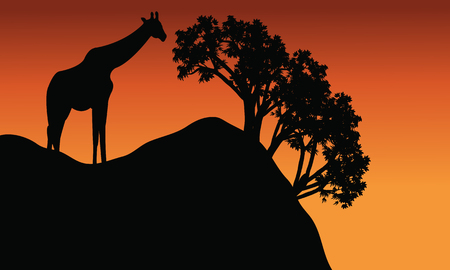 giraffe silhouette: Giraffe silhouette in cliff scenery at the afternoon