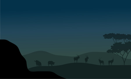 herbivore: Silhouette of antelope and bison at the night