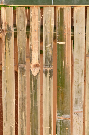 to conceal: Bamboo has many benefits May be used to make a living fence, seats and much more