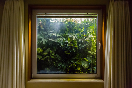 planted: Planted window