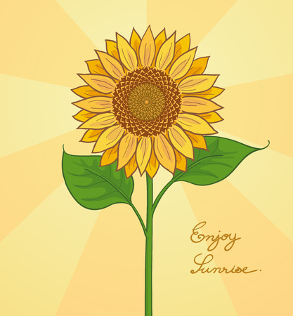 handwrite: handdraw illustration of sunflower Illustration