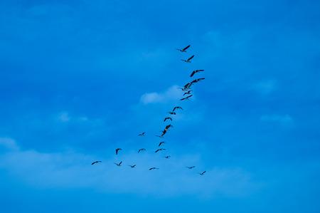 migrating: Migrating Birds