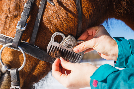 Girl combing black horse mane with a comb. 版權商用圖片