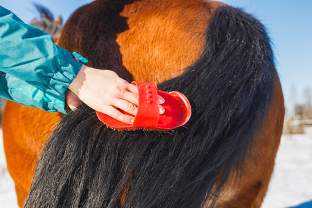 Girl is combing a magnificent horse tail.