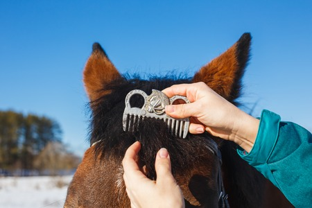 Caring for a horse after winter. Combing the special mane comb on the horses head.