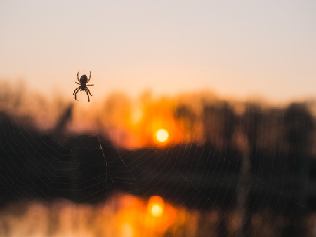 Spider crawling over the lake at sunset. Imagens