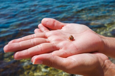 Small hermit crab on a female palm against the background of the sea.